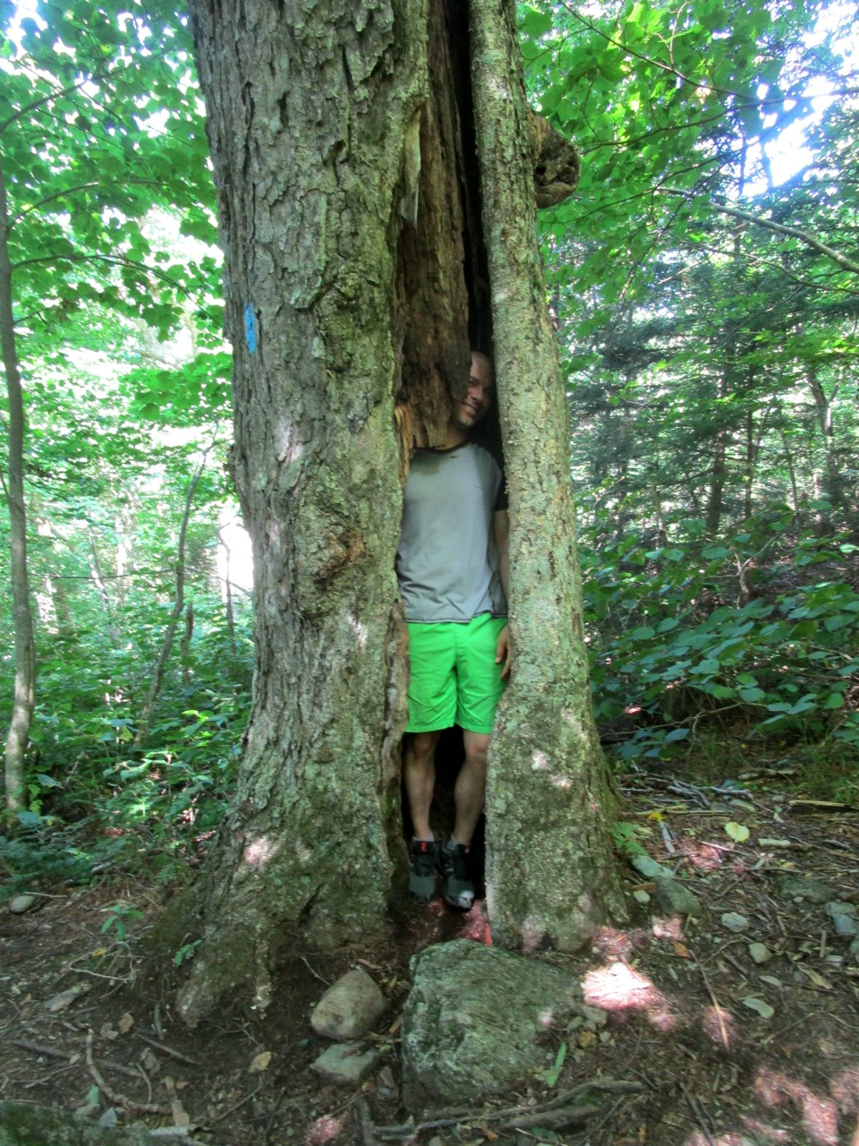 Photo i_nathan_in_the_tree.jpg